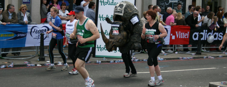 Rhinoedit