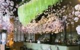 sakura-sake-no-hana-cherry-blossom-we-love-food-its-all-we-eat
